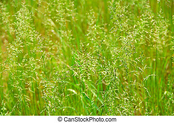 Vysoká tráva