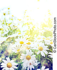 Vysoké světlo, zářivé letní květy