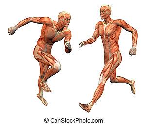 w/, výstřižek, sval, přestrojit osoba