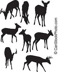 whitetail, silhouettes, jelen