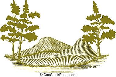 Woodcutská divočina