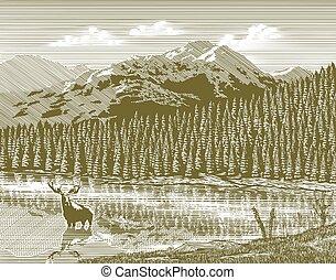 Woodcutská hora