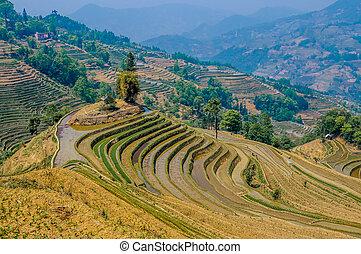 yuanyang, yunnan, rýže, čína, uspořádat terasovitě