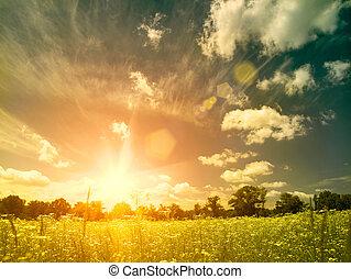Zářivé léto za soumraku nad divokou loukou. Přírodní pozadí s krásnými květy