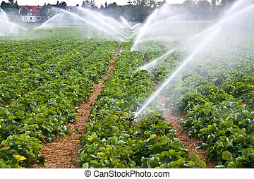 zředit vodou větev, zemědělství