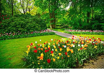 Zahrada v Keukenhof, tulipánové květiny a stromy. Netherlands