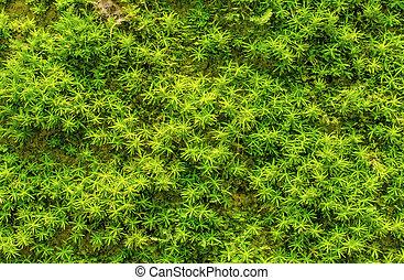 Zarostlá zelenina v lese