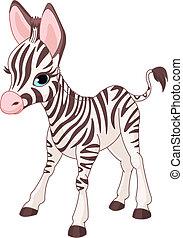 zebra, šikovný, hříbě