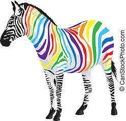 Zebra. Svíčky různých barev.