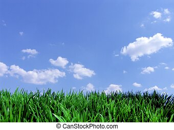 Zelená tráva a modrá obloha