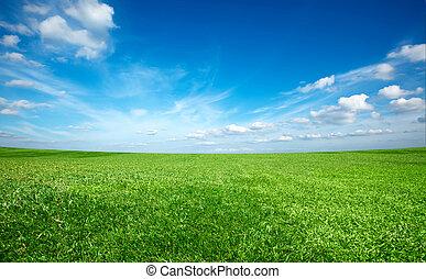 Zelená tráva pod modrou oblohou