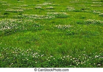 Zelená tráva z pole