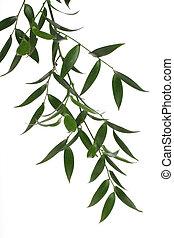 Zelená větev