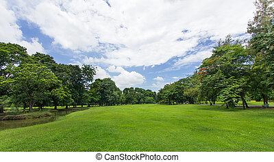 Zelená zahrada a stromy s modrou oblohou ve veřejném parku