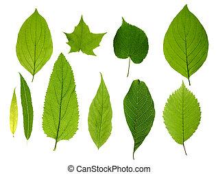 Zelené listí izolované