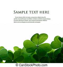 Zelené listy se spojují s textem.