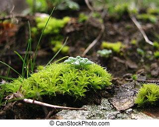 Zelené mosy