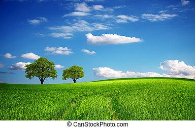 Zelené pole na jaře
