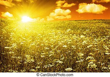 Zelené pole s kvetoucími květinami a červenými nebemi