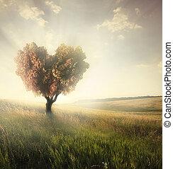 Zelené pole se srdcem