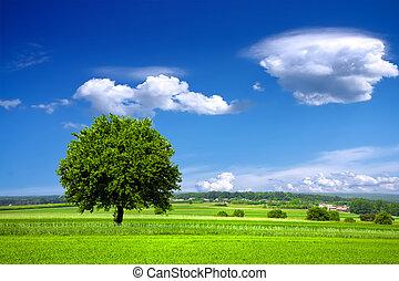 Zelené prostředí