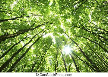 Zelené stromy