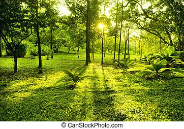 Zelené stromy v parku
