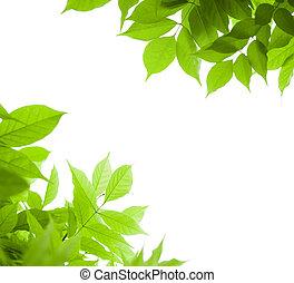 Zelené zanechává hranice na úhel pohledu na stránku bílého listu