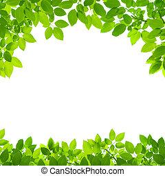 Zelené zanechává hranice na bílém pozadí
