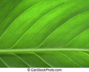 Zelený list se zavírá