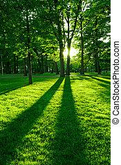 Zelenej park