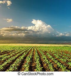 Zemědělské zelené pole při západu slunce