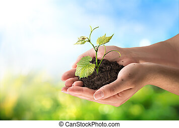 Zemědělský koncept, malá rostlina