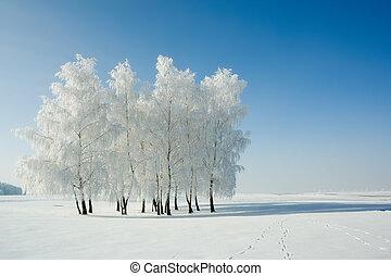 Zima a stromy