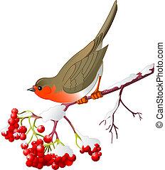 Zimní pták