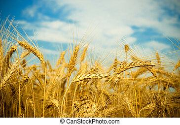 Zlaté pole