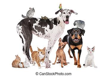Zvířata před bílým pozadím
